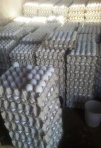 eieren pluimveebedrijf
